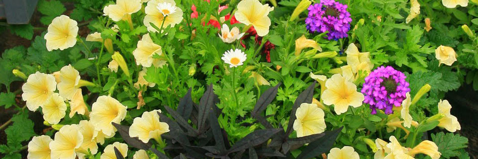 Annuals Flower Basket
